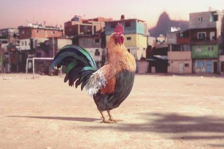 Un coq danse la samba