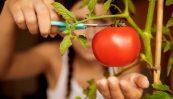 poster-21152-ray-ban-tomatina.jpg